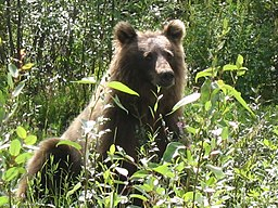 Grizzly Beaver Creek