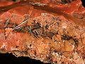 Groutite-Chalcedony-230570.jpg