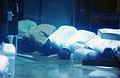 Guantanamo captives praying -a.jpg