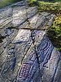 Hällristningar i Herrebro, den 25 augusti 2008, bild 7.JPG