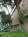 HK 觀塘 Kwun Tong 海濱道公園 Hoi Bun Road Park LCSD Dec-2013 台灣相思樹 Acacia confusa trees 06.JPG