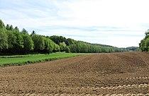 Hagen NSG-Lange Bäume.JPG