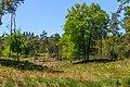 Half open heuvelig landschap. Locatie, Kroondomein Het Loo 02.jpg