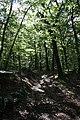 Harz Stecklenberg Wanderung Stecklenburg - Lauenburg - Aufstieg zur Lauenburg - panoramio.jpg
