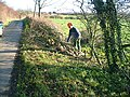 Hedge laying. - geograph.org.uk - 289378.jpg