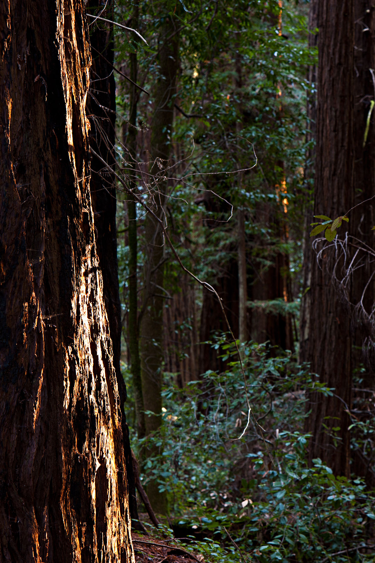 Hendy Woods State Park - Wikipedia