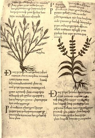 Pseudo-Apuleius - Page of the Old English Herbarium in Cotton Vitellius C. iii.