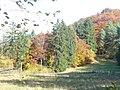 Herbst am Munterley - geo.hlipp.de - 6526.jpg
