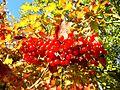 Herbst im Nordschwarzwald - panoramio.jpg