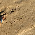 Heron Tracks - Flickr - treegrow.jpg