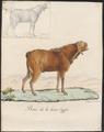 Hircus aegagrus - 1700-1880 - Print - Iconographia Zoologica - Special Collections University of Amsterdam - UBA01 IZ21300243.tif
