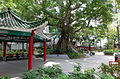 Hollywood Road Park Big Tree 201505.jpg