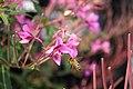 Honigbiene (11) (28555602705).jpg
