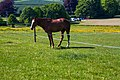 Horse @ West Wycombe Park (7322675378) (2).jpg