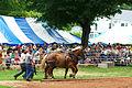 Horse Pull (1425133908).jpg