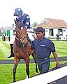 Horse and jockey yarmouth races.jpg
