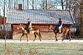 Horses in Tolvsbo. Camera looking east. - panoramio.jpg