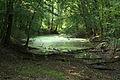 Hrbáčkovy tůně - lužní les.jpg