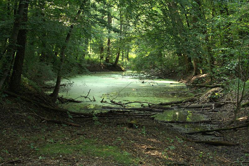 Soubor:Hrbáčkovy tůně - lužní les.jpg