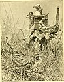 Hunting and trapping stories; a book for boys (1903) (14595912367).jpg