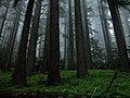 Hurricane forest fog mist Light NPS Photo (17300276852).jpg