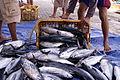 Ikan tongkol di Karimun Jawa.JPG