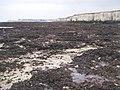 In Epple Bay looking east - geograph.org.uk - 1035455.jpg