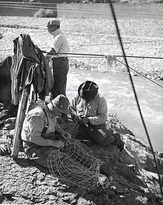 Salmon cannery - Repairing salmon nets, around 1950