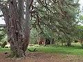 Inshriach Bothy - geograph.org.uk - 1495144.jpg