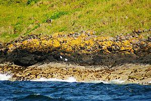 Great Cumbrae - The intertidal zone of Great Cumbrae, Scotland