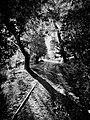Intricate Shadowing (51616297099).jpg