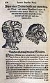 Io. Baptistae Portae Neapolitani — Libri 4 Figur eines Widderkopffs mit einem weyten Maul.jpg