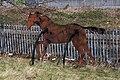 Iron Horse sculpture passant at Smethwick Rolfe Street 47.jpg