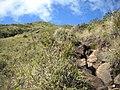 Isabeloca^ - panoramio (2).jpg