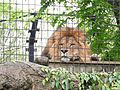 Ishikawa Zoo - Animals - 32 - 2016-04-22.jpg