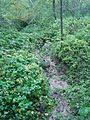 Izžuvis strauts- 57°14′40.6″N 24°57′20.4″E - mikroskops - Panoramio.jpg