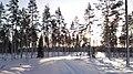 Januari Sol Oppsjö - panoramio.jpg
