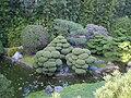 Japanese Tea Garden 8.JPG