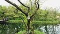 Jeju Ecoland (2).jpg