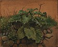 Johan Thomas Lundbye - A Burdock and Other Plants on a Stone Wall - KMS7414 - Statens Museum for Kunst.jpg