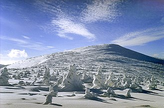 Tree line - Severe winter climate conditions at alpine tree line causes stunted krummholz growth. Karkonosze, Poland.