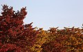 KOCIS Korea Autumn SkyPark 18 (10471578603).jpg