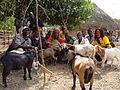 Kabala goats.jpg