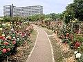 Kaiseizan Park Rose garden from the east.jpg