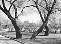 Kampen park - no-nb digifoto 20150625 00197 NB MIT FNR 11282.jpg