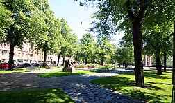 Populus Kallio