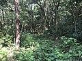 Kasuya Research Forest of Kyushu University 8.jpg