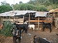 Keçiler yayladağı 2.JPG