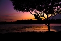 Kid in a tree by the river at sunset.png