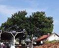 Krishnarajasagara Railway Station, Mysore, India.jpg